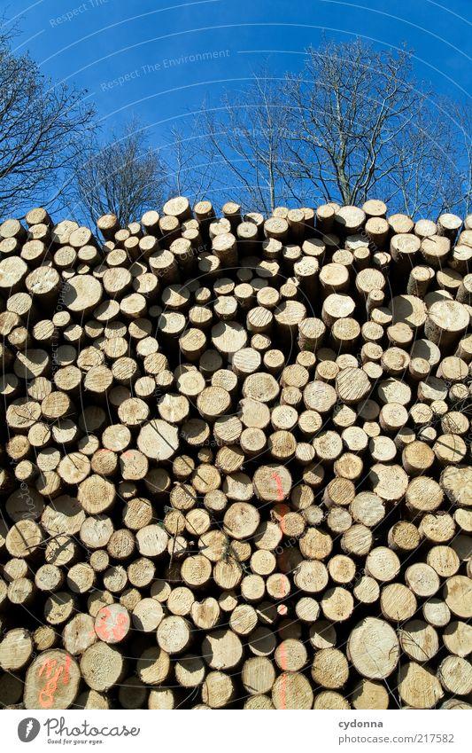 Den Wald vor lauter Bäumen nicht sehen Natur Baum ruhig Leben Holz Traurigkeit Umwelt ästhetisch rund Ende Wandel & Veränderung Vergänglichkeit Baumstamm Idee