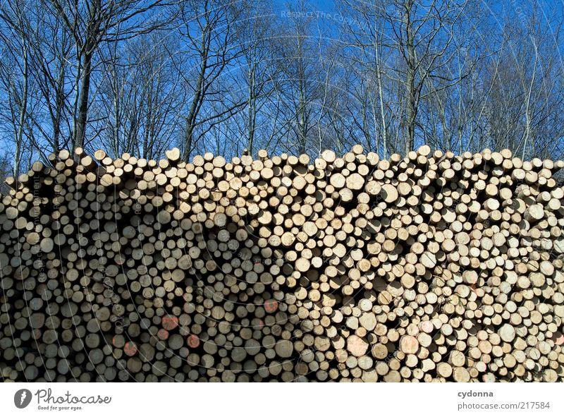 Bäume vor lauter Wald sehen Natur Baum ruhig Wald Mauer Umwelt ästhetisch rund Ende Wandel & Veränderung Vergänglichkeit Baumstamm Idee Schönes Wetter Barriere Stapel