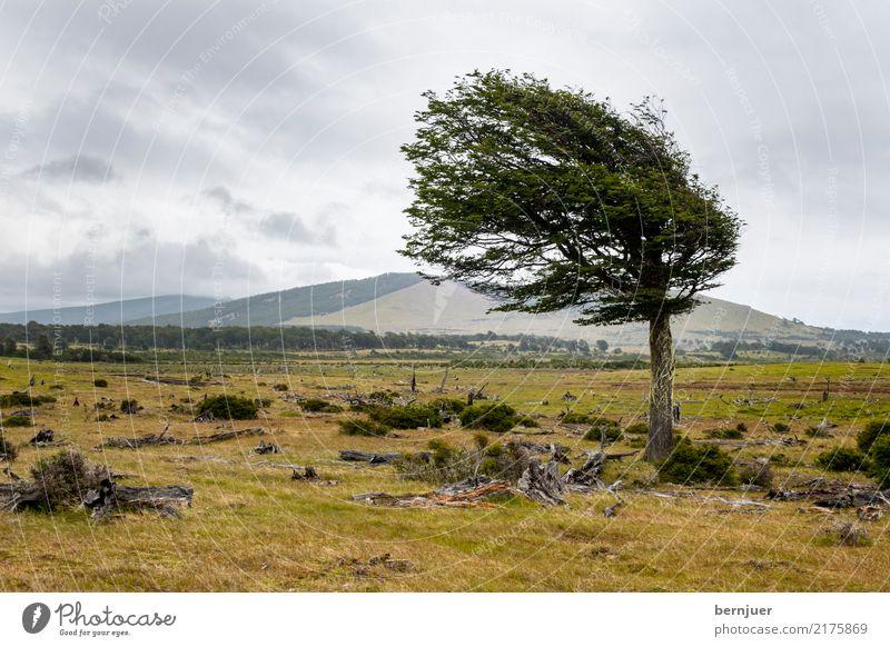 Hauptwindrichtung Natur Pflanze grün Baum Landschaft Wolken Umwelt außergewöhnlich Freiheit Luft Kraft Wind authentisch einzeln Hügel Neigung