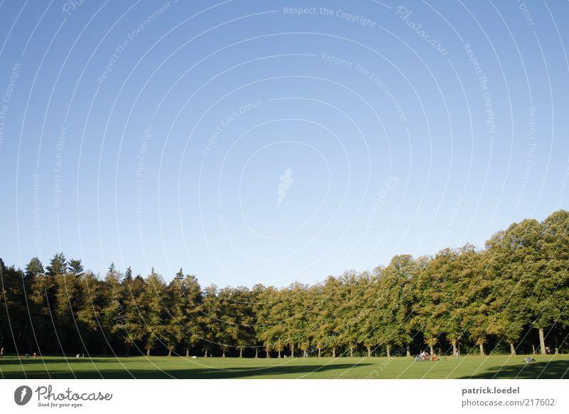 Volkspark Freizeit & Hobby Umwelt Natur Landschaft Luft Himmel Wolkenloser Himmel Schönes Wetter Baum Wiese Wald Park Zufriedenheit Heimweh Erholung Leben