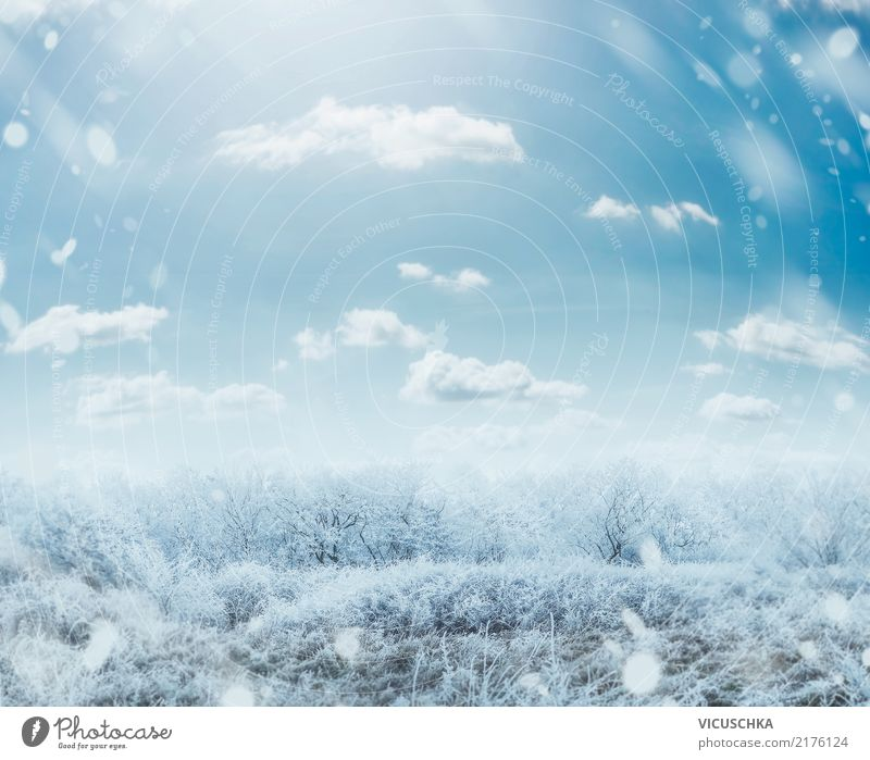 Winter frostiger Tag Landschaft Lifestyle Garten Weihnachten & Advent Natur Himmel Schönes Wetter Baum Gras Sträucher Park Hintergrundbild Frost Winterstimmung