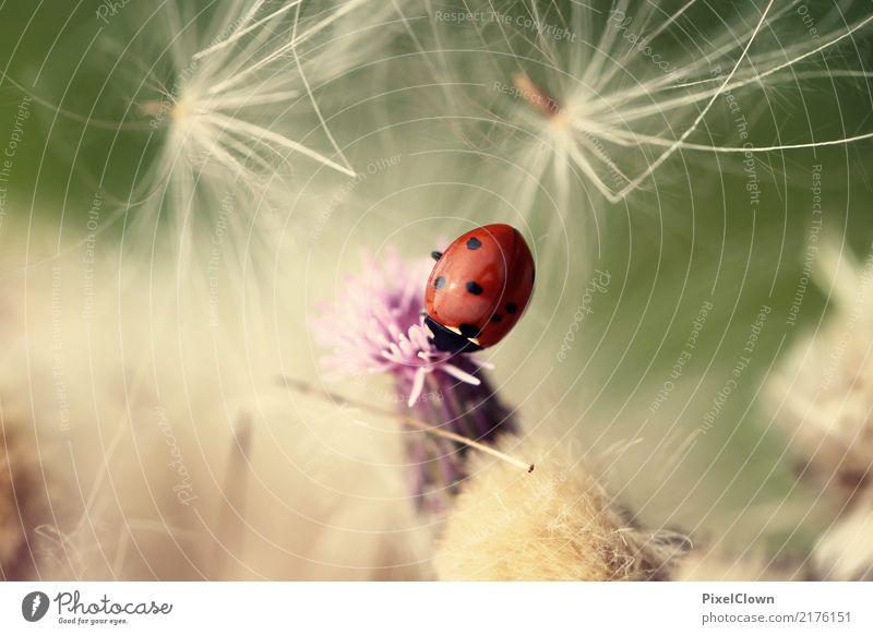 Marienkäffer Glück Ferien & Urlaub & Reisen Tourismus Natur Landschaft Pflanze Blume Garten Wiese Feld Tier Käfer 1 Blühend ästhetisch rot Gefühle Farbfoto