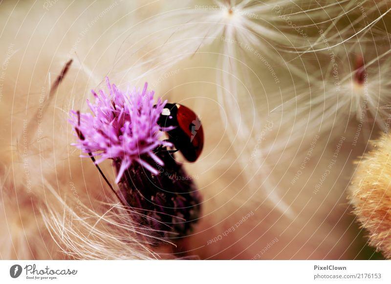 Marienkäfer Natur Pflanze Sommer weiß Landschaft rot Einsamkeit Tier Umwelt Blüte Gefühle Wiese Glück Garten fliegen Ausflug