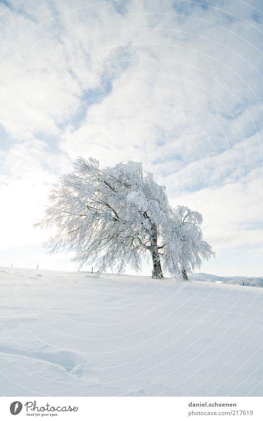 Schneefallgrenze 500 Meter ! Winter Himmel Klima Eis Frost Baum hell blau weiß Buche Schauinsland Schwarzwald Menschenleer Textfreiraum oben Textfreiraum unten