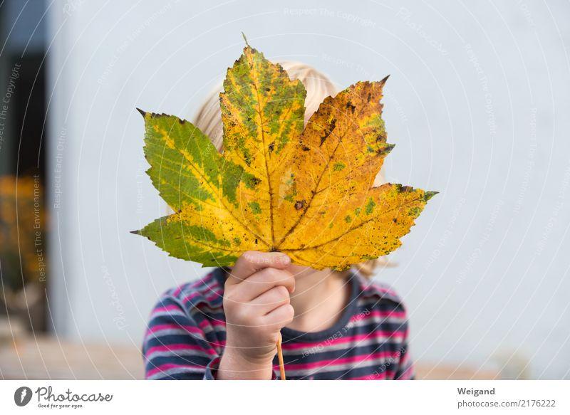 Herbstkind Kind Mensch Blatt Freude Mädchen Leben Gesundheit Bewegung träumen Kindheit frisch Fröhlichkeit lernen Freundlichkeit berühren