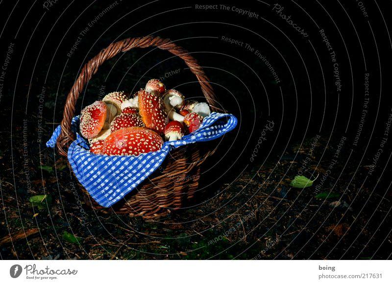 Rotkäppchen besucht die Großmutter in Berlin Pilz Glücksbringer Umwelt Korb Fliegenpilz Pilzsucher Gift Rauschmittel Waldboden Farbfoto Außenaufnahme Dämmerung
