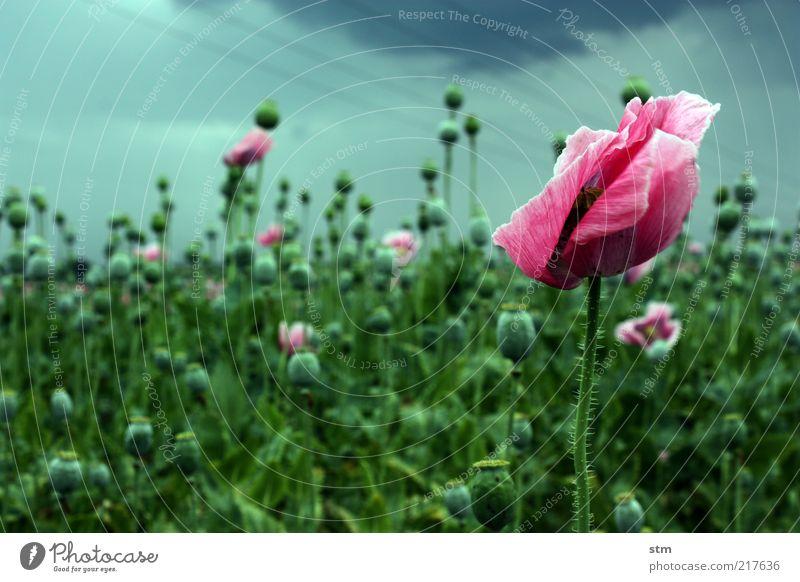 wind schön Gesundheit Umwelt Natur Landschaft Pflanze Sommer Herbst Wetter schlechtes Wetter Unwetter Wind Sturm Regen Gewitter Blume Blatt Blüte Nutzpflanze
