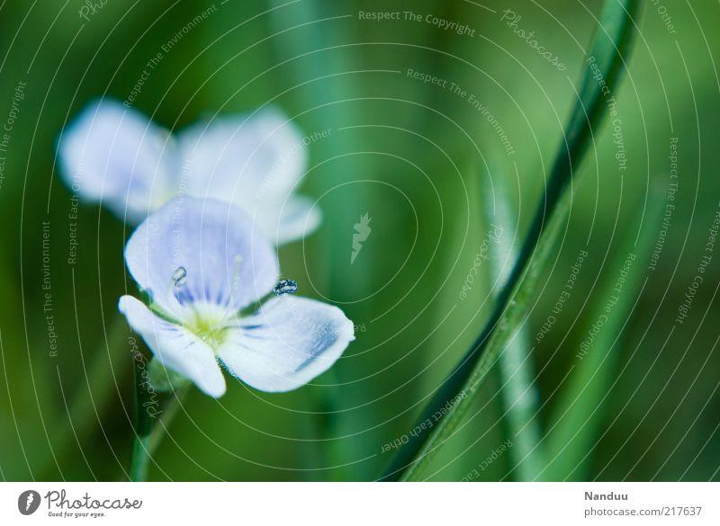 Ich will Sommer. Natur Blume grün Pflanze Blüte Gras Umwelt Kitsch violett Stengel Blühend niedlich Duft Halm Wiesenblume