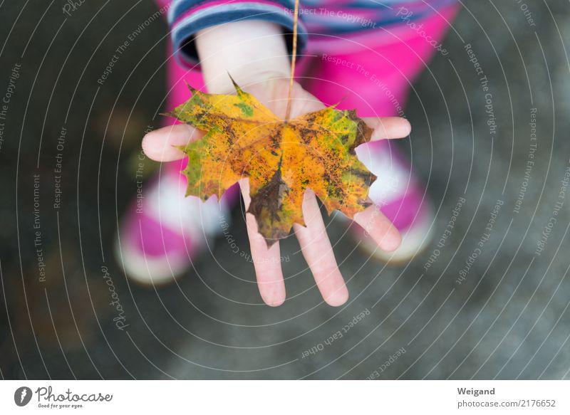 Herbstgold Kind Mensch Blatt Mädchen gelb Liebe Glück Schule rosa Zusammensein Freundschaft Kindheit Geschenk berühren Kleinkind