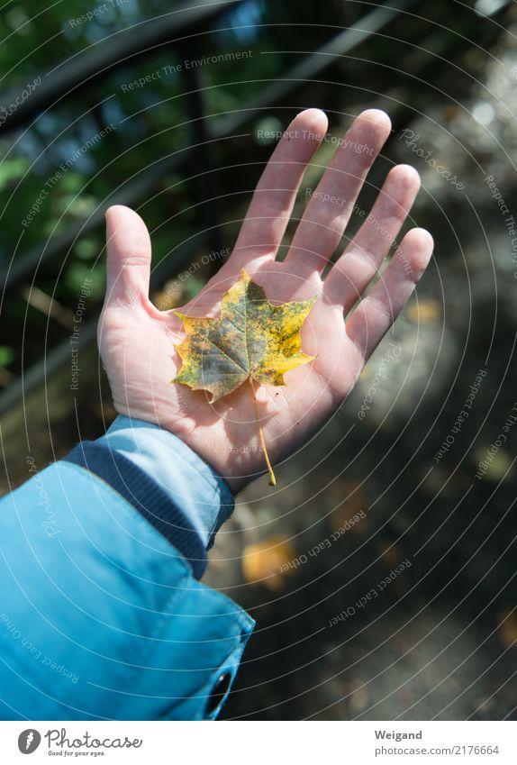 auf die Hand 1 Mensch Sonnenlicht Herbst blau gelb Glück Fröhlichkeit Zufriedenheit Lebensfreude selbstbewußt Kraft Freundschaft Zusammensein trösten dankbar