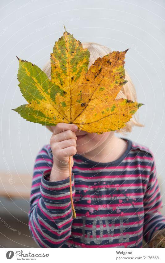 Herbstkind harmonisch Kindererziehung Kindergarten lernen Mensch Kleinkind Mädchen Familie & Verwandtschaft Kindheit 3-8 Jahre beobachten Wachstum Glück