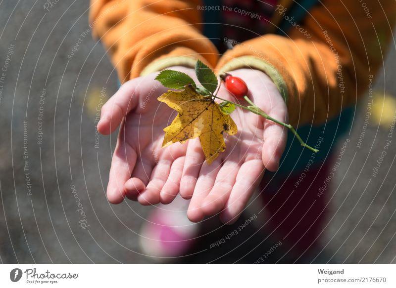 Herbstschatz Kindererziehung Kindergarten Schulkind Schüler Mensch feminin Junge 1 achtsam Wachsamkeit Freundlichkeit Verlässlichkeit Pünktlichkeit gewissenhaft