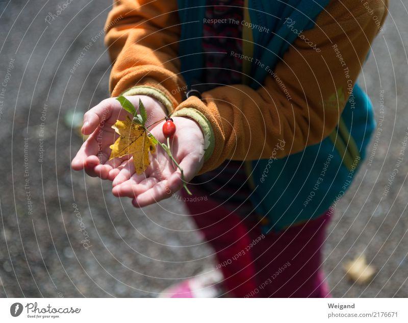 Fundbüro Wohlgefühl Zufriedenheit Sinnesorgane Erholung Duft Spielen Fröhlichkeit achtsam Wachsamkeit Freundlichkeit Vorsicht Gelassenheit geduldig Herbst Kind