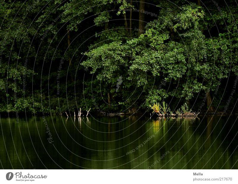 The secret hideaway Umwelt Natur Landschaft Wasser Pflanze Baum Sträucher Seeufer Teich dunkel grün Stimmung Romantik geheimnisvoll Idylle ruhig Umweltschutz