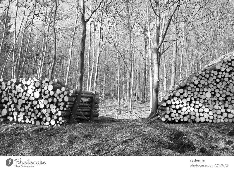 Ökostützen Natur Baum ruhig Wald Leben Umwelt Landschaft Ordnung ästhetisch Hilfsbereitschaft Wandel & Veränderung rund Vergänglichkeit stoppen Schutz Kreativität