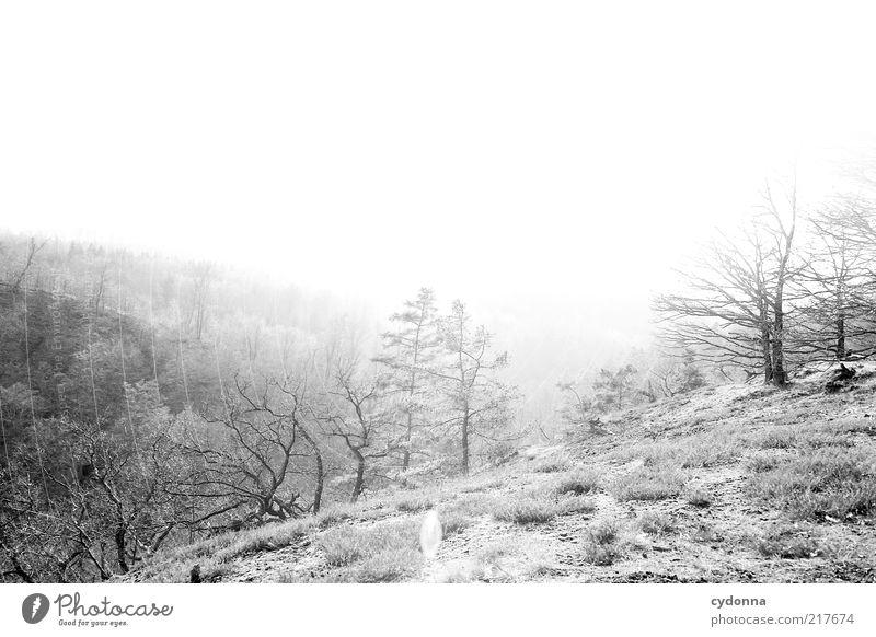 Gegenlicht Leben Wohlgefühl Zufriedenheit Erholung ruhig Umwelt Natur Landschaft Sonnenlicht Baum Wiese Wald einzigartig entdecken Freiheit geheimnisvoll Idylle