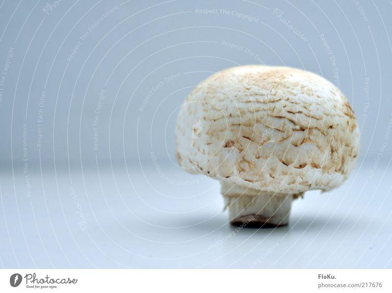 Champ Lebensmittel Ernährung Bioprodukte Vegetarische Ernährung Fingerfood lecker rund Pilz Champignons Zutaten einzeln Innenaufnahme Nahaufnahme Menschenleer
