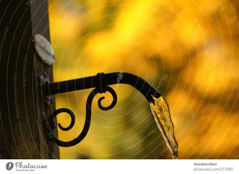 Trinkwasser Wasser Herbst glänzend Umwelt Brunnen fließen Wasserhahn herbstlich Herbstfärbung