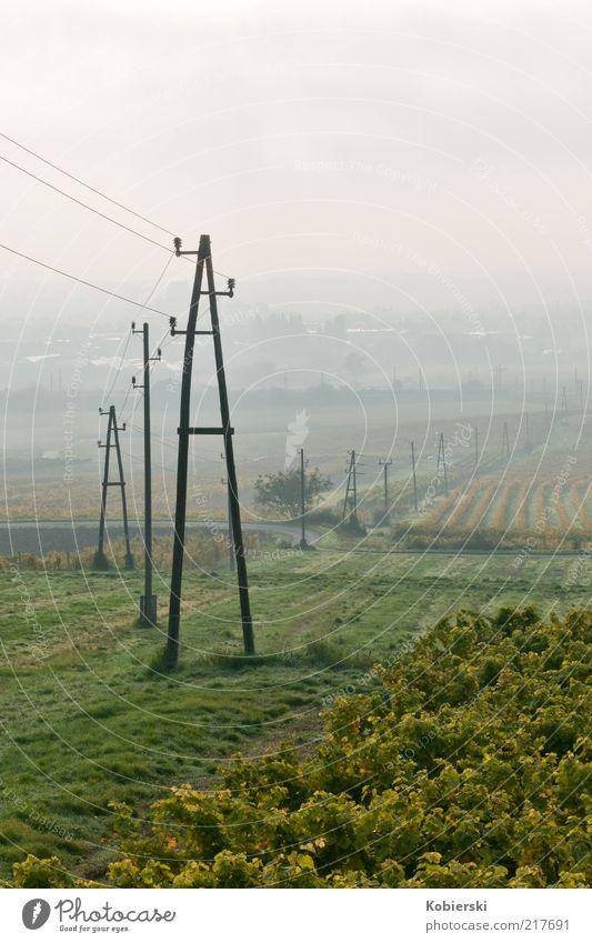 Weinberg 2 Herbst Nebel Weinranken Feld Wachstum frisch gelb grün Zufriedenheit Gelassenheit Energie Erholung genießen Horizont Klima nachhaltig Umwelt