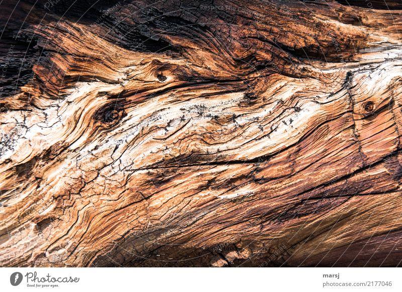 knorrig, alt und abgelebt | jenseits des mainstreams natürlich Holz außergewöhnlich braun Linie authentisch fantastisch Riss verwittert Maserung Patina