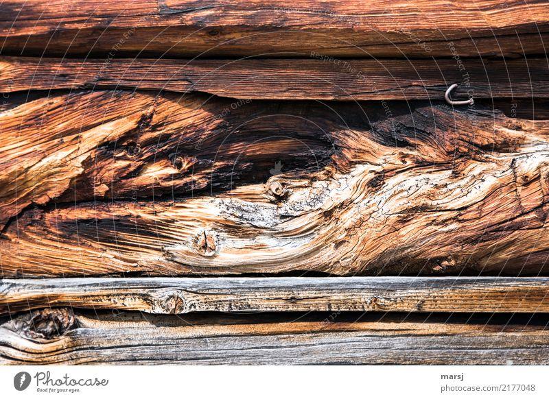 Holz mit Geschichte Nagel Maserung Holzwand alt außergewöhnlich authentisch einzigartig braun entdecken Natur skurril Verfall Riss uneben verdreht verwittert
