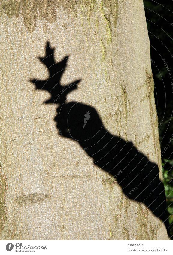 another... Mensch Natur Hand alt Baum Pflanze Blatt schwarz Herbst Umwelt braun Arme groß natürlich Vergänglichkeit festhalten