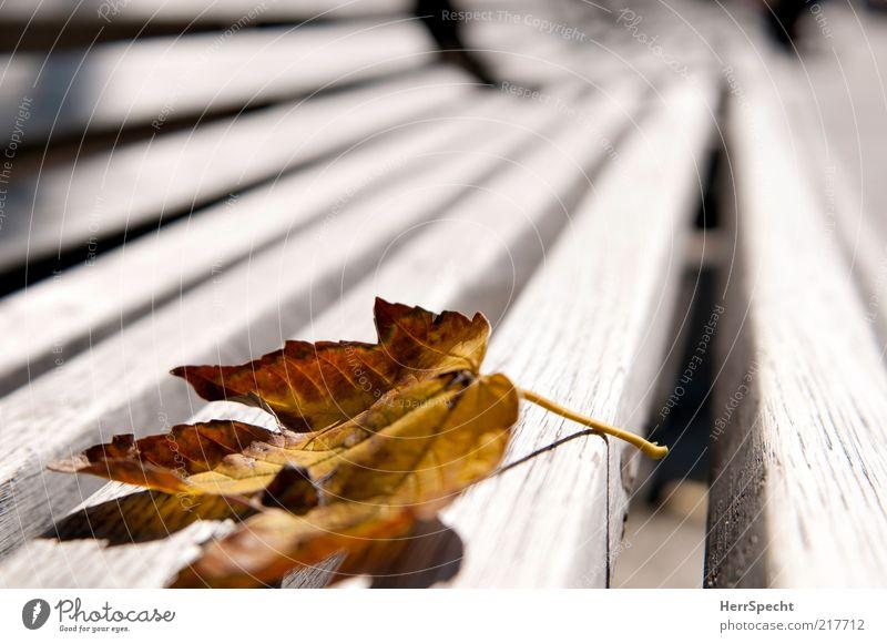 Mein Beitrag zur Herbstblätterei Blatt braun gelb Einsamkeit Verzweiflung Parkbank Bank Holz Maserung Stengel Blattfaser verwaschen Verfall fallen Farbfoto