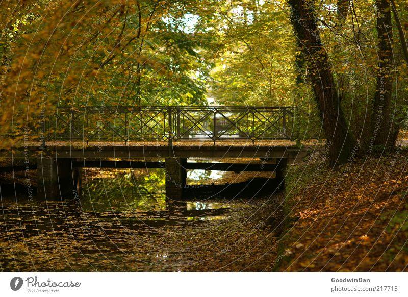Laubdecke II Umwelt Natur Park Stimmung Brücke Bach Reflexion & Spiegelung Baum Ast Herbst Herbstlaub Farbfoto Außenaufnahme Morgendämmerung Kontrast