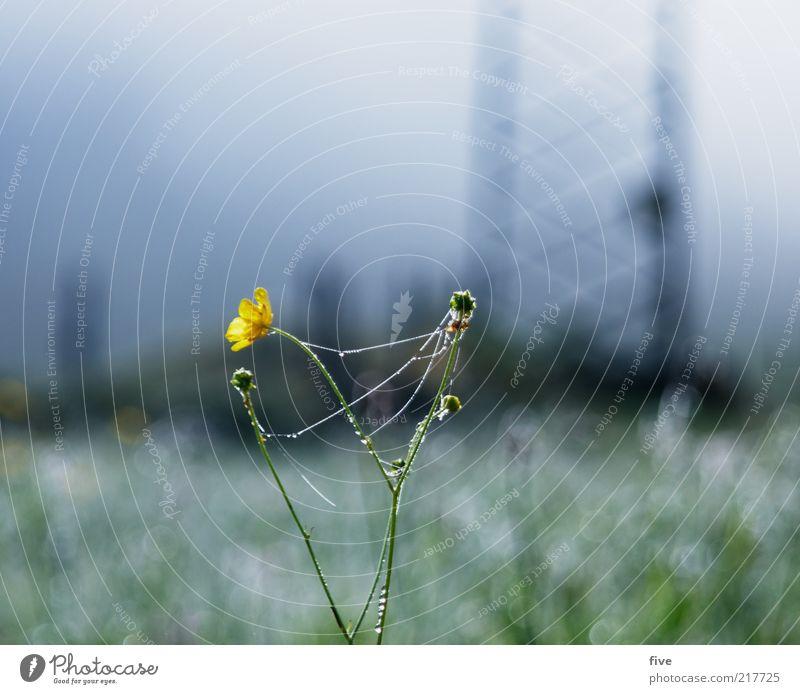 going am wilden kaiser Umwelt Natur Landschaft Himmel Herbst Pflanze Blume Gras Grünpflanze Wiese Feld kalt Nebel Tau Wasser Wassertropfen Strommast Farbfoto