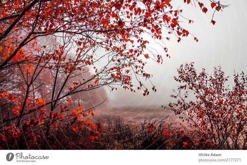 Herbstnebel Natur Baum Landschaft rot Erholung Blatt ruhig Wald Innenarchitektur Design orange Zufriedenheit leuchten Nebel Dekoration & Verzierung