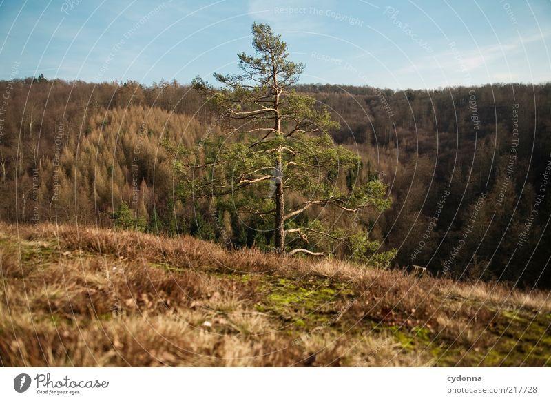 Raumteiler Wohlgefühl Zufriedenheit Erholung ruhig Ferne Freiheit Umwelt Natur Landschaft Herbst Baum Wald Berge u. Gebirge ästhetisch einzigartig geheimnisvoll