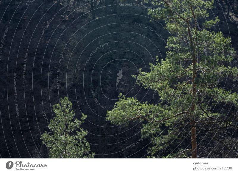 Nachzügler Natur Baum ruhig Wald Leben Umwelt klein Zeit groß ästhetisch Wachstum Wandel & Veränderung einzigartig Ziel Vergänglichkeit Idylle
