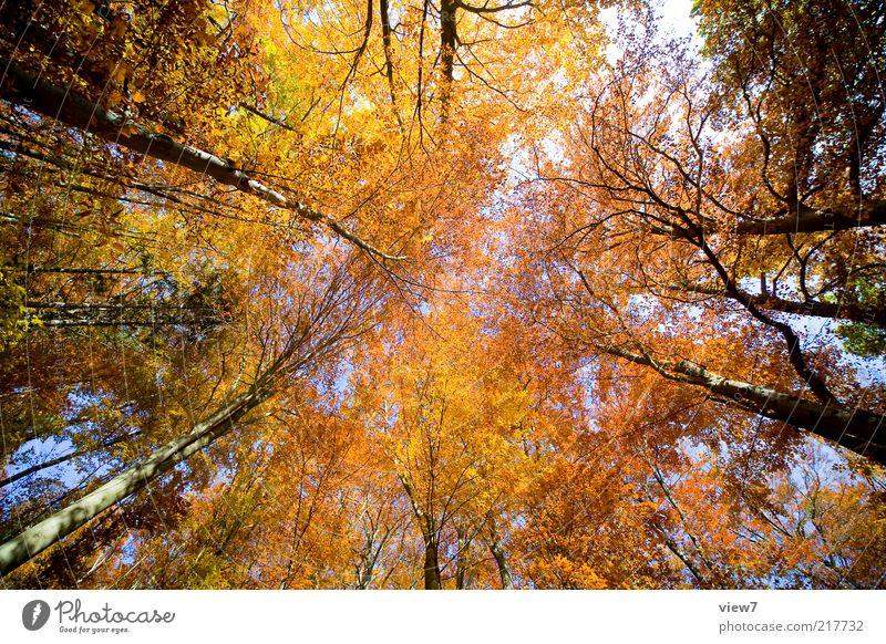 Oktober Natur Himmel Baum Pflanze ruhig Blatt gelb Wald Herbst braun Umwelt hoch ästhetisch authentisch einfach natürlich