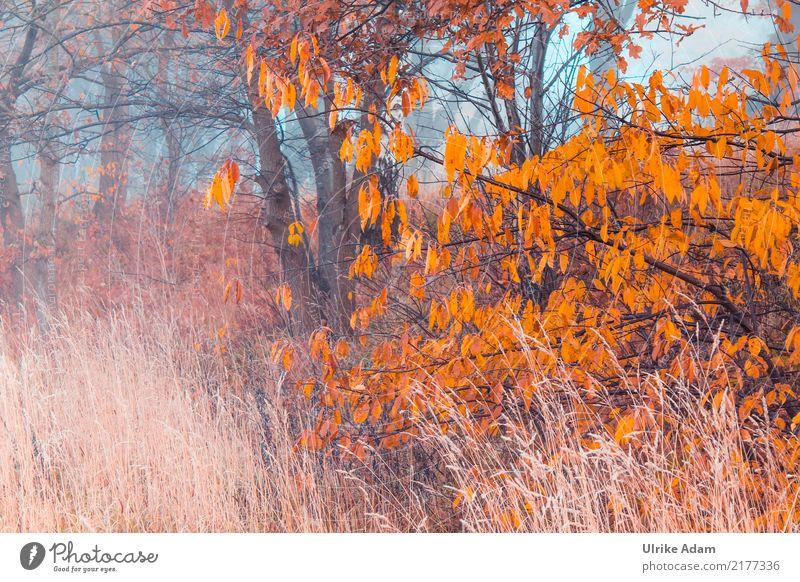 Nebel im Herbst Natur Pflanze Baum Blatt Wald Innenarchitektur Gras braun Design orange Zufriedenheit träumen Feld Dekoration & Verzierung