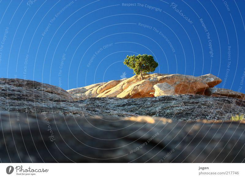 Find the Turtle Natur Landschaft Urelemente Erde Luft Himmel Wolkenloser Himmel Schönes Wetter Wärme Pflanze Baum Sträucher Felsen Schlucht Sandstein Stein