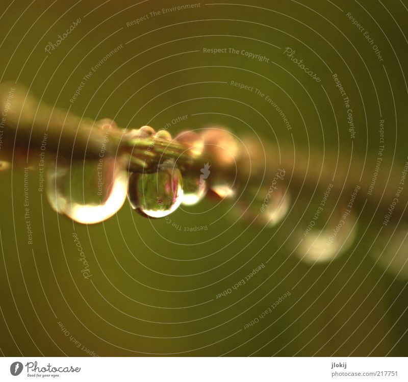 after the rain... Natur Pflanze Urelemente Wasser Wassertropfen Herbst schlechtes Wetter Regen Gras Grünpflanze hängen Wachstum ästhetisch Flüssigkeit nass