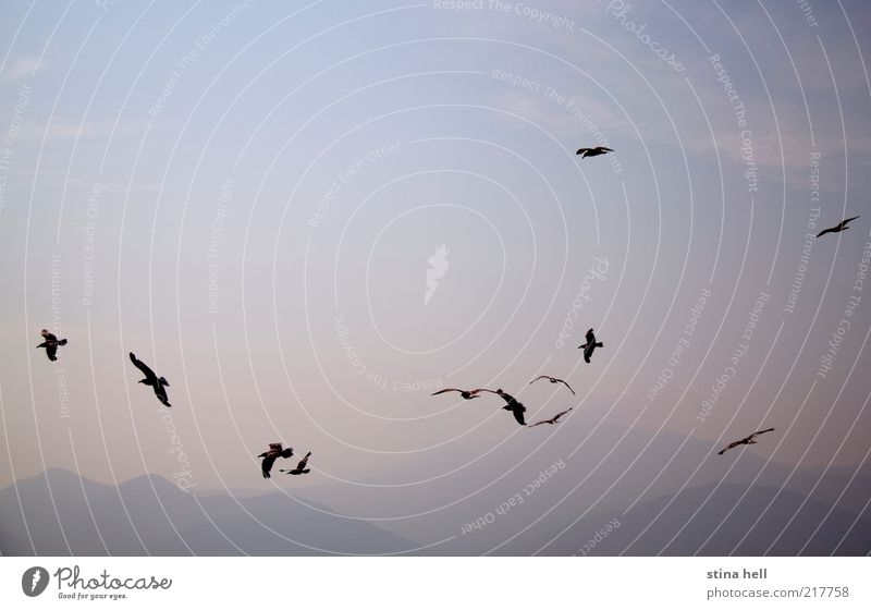 Himmel Natur Ferien & Urlaub & Reisen schön Sommer Landschaft Tier Freiheit Horizont ästhetisch Fröhlichkeit Insel Lebensfreude Schönes Wetter Möwe Nostalgie