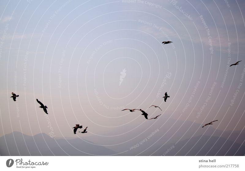SEEGELN Landschaft Tier Himmel Sommer Schönes Wetter Insel Bootsfahrt Möwe Fröhlichkeit Lebensfreude Optimismus Freiheit ästhetisch Ferien & Urlaub & Reisen
