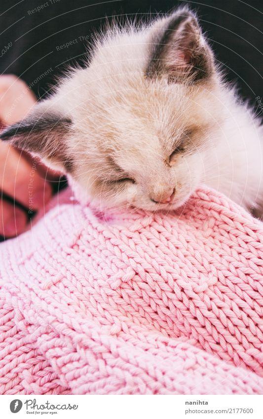 Schöne Schlafkätzchen Tier Haustier Katze Tiergesicht 1 Tierjunges Wolle Wollpullover Hand schlafen träumen Freundlichkeit schön niedlich rosa schwarz weiß