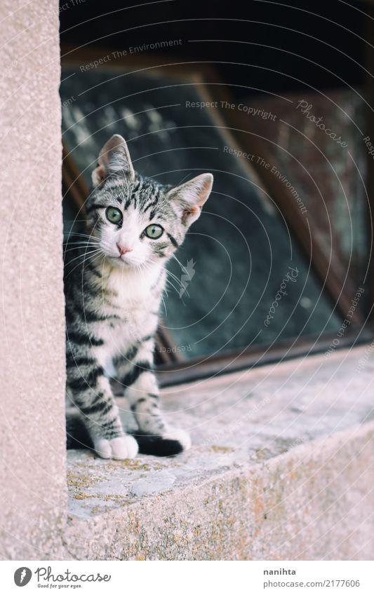 Kleine neugierige Katze Natur Einsamkeit Tier Fenster schwarz Auge Tierjunges Wand klein Mauer grau braun Stimmung frei sitzen
