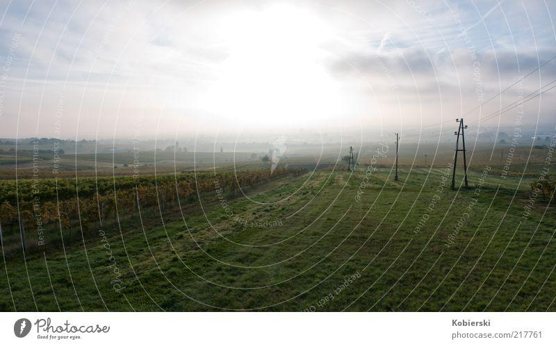 Morgen am Weinberg Wolken Schönes Wetter Nebel entdecken genießen leuchten frei frisch nachhaltig positiv blau gelb grün Zufriedenheit Optimismus ruhig Neugier