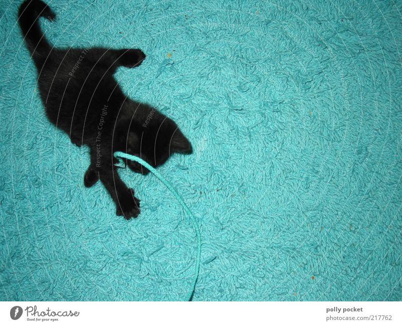 Spieltrieb blau Freude schwarz Tier Leben Spielen Bewegung Katze verrückt weich fangen Fell Schnur niedlich Jagd türkis