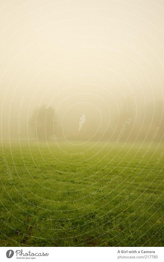 noch nicht ganz wach ........ Umwelt Natur Landschaft schlechtes Wetter Nebel Baum Gras Feld träumen Unendlichkeit kalt natürlich grün weiß Verschwiegenheit