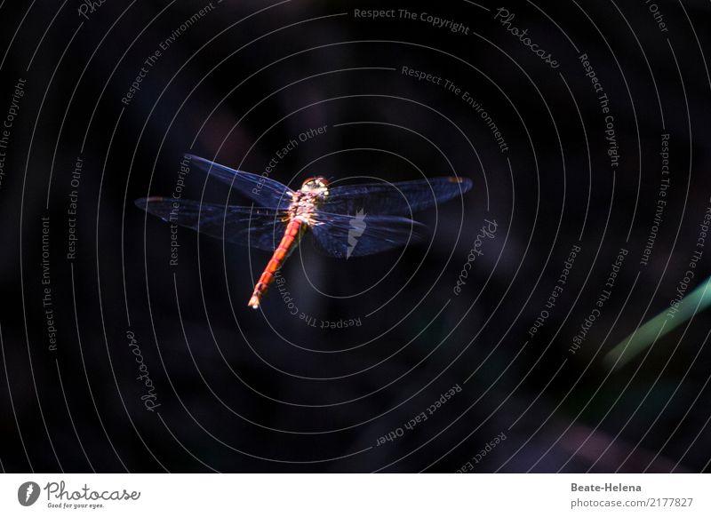 Geschwindigkeit | Blitzschnell elegant Umwelt Natur Seeufer Moor Sumpf Luftverkehr Tier Flügel Libelle Libellenflügel Arbeit & Erwerbstätigkeit Bewegung fliegen