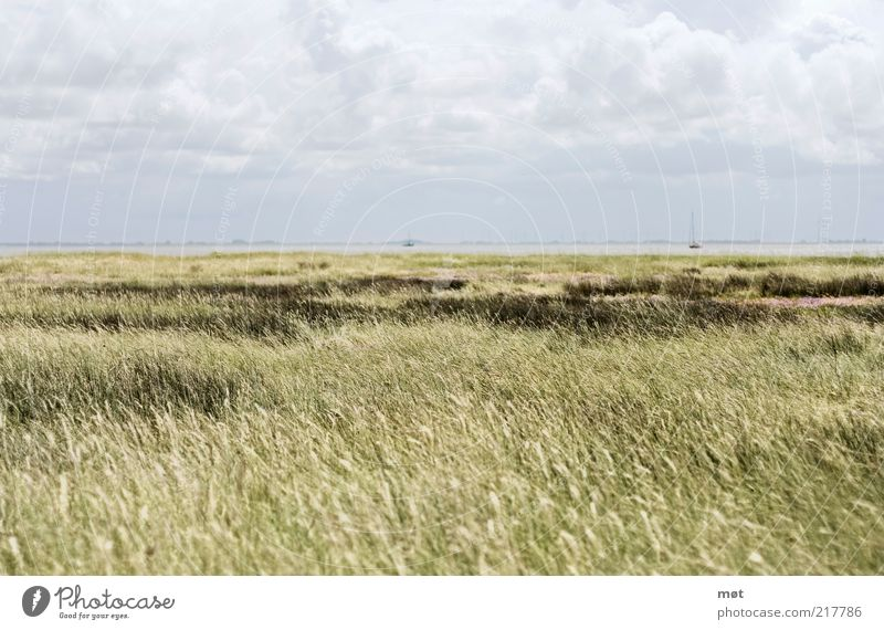 Ruhe vor dem Sturm Ferne Freiheit Sommer Meer Insel Umwelt Natur Landschaft Himmel Wolken Nordsee Wangerooge Deutschland Erholung Gelassenheit ruhig Feld