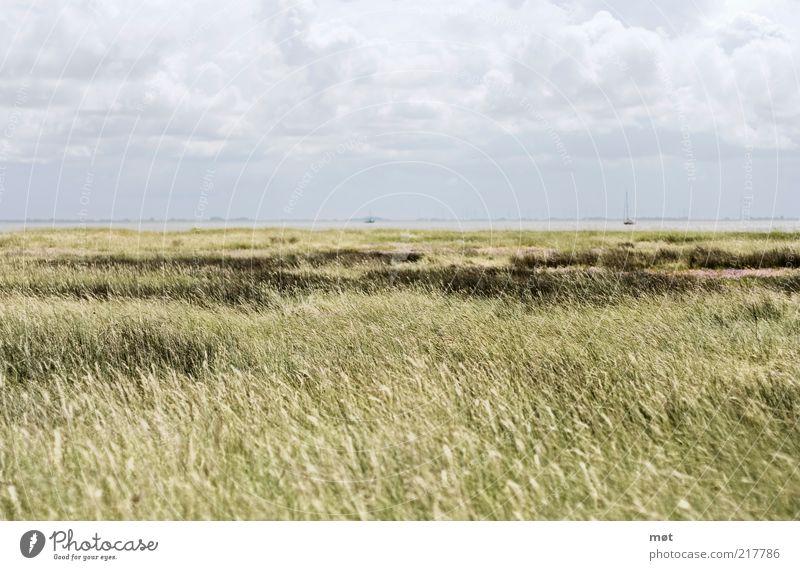 Ruhe vor dem Sturm Himmel Natur grün Sommer Meer Wolken ruhig Einsamkeit Ferne Erholung Freiheit Umwelt Landschaft Feld Deutschland Insel