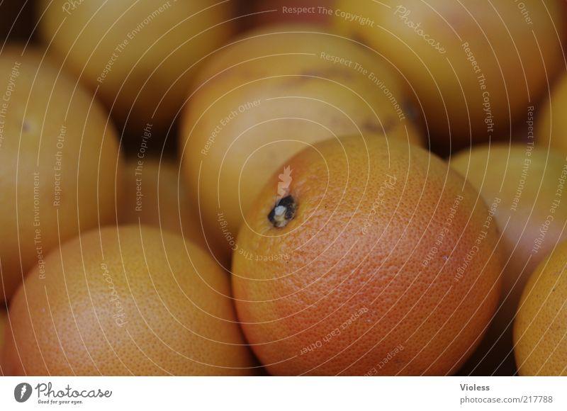 orangene Orangen Lebensmittel rund saftig Grapefruit Farbfoto Nahaufnahme Unschärfe Frucht Gesundheit Vitamin rot viele Textfreiraum oben Menschenleer Tag