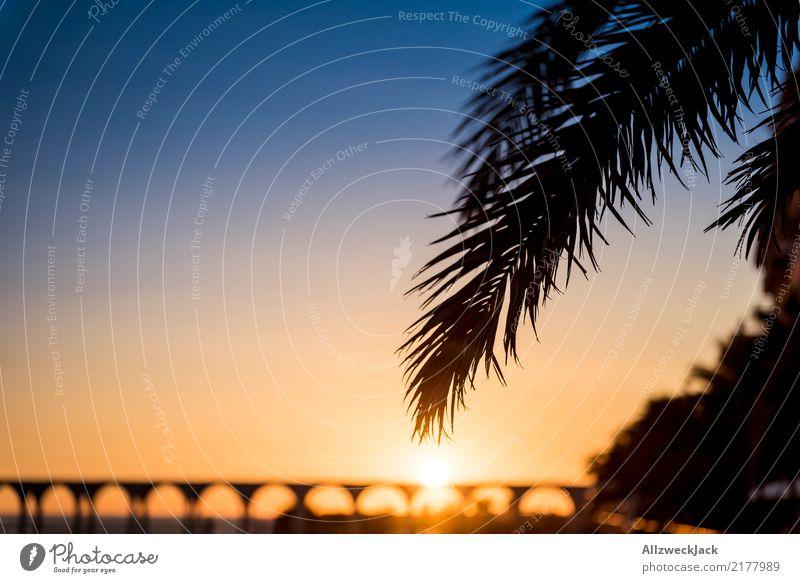 Urlaubskitsch Dämmerung Sonnenuntergang Gegenlicht Silhouette Ferne Freiheit Sommer Sommerurlaub Horizont maritim blau orange Erholung Palme Blatt Insel