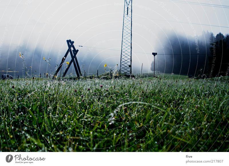going am wilden kaiser Umwelt Natur Landschaft Wassertropfen Himmel Wolken schlechtes Wetter Nebel Pflanze Baum Blume Gras Sträucher Blatt Grünpflanze Garten