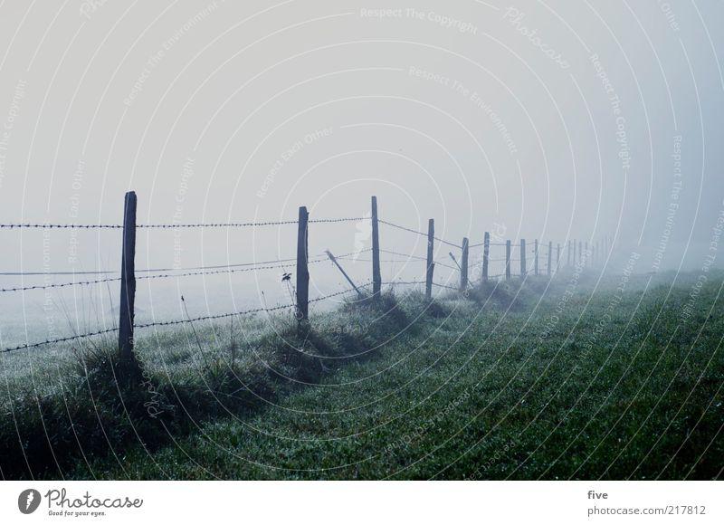 zaun ins nichts Natur Pflanze dunkel kalt Wiese Herbst Gras Landschaft Feld Nebel Umwelt Zaun Draht unheimlich Grünpflanze schlechtes Wetter